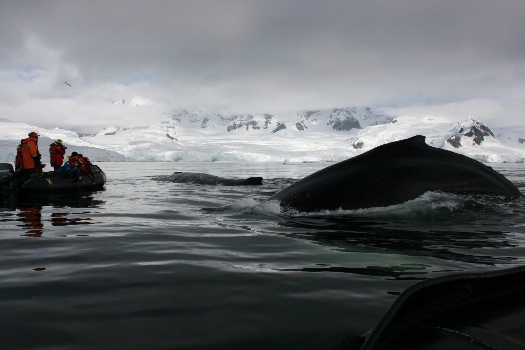 whales in close