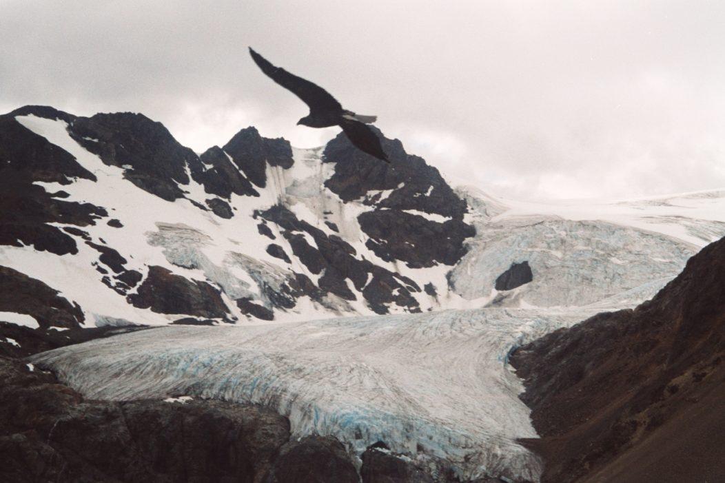 Condors over the Paso de Picotas, South Aysen, Chile