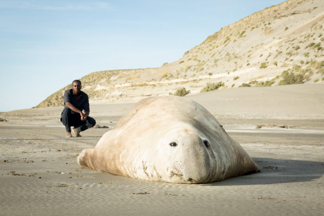 Patrick Aryee with male seal